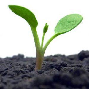 Gardening Seeds